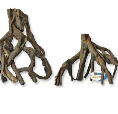 mangrove wortel 2