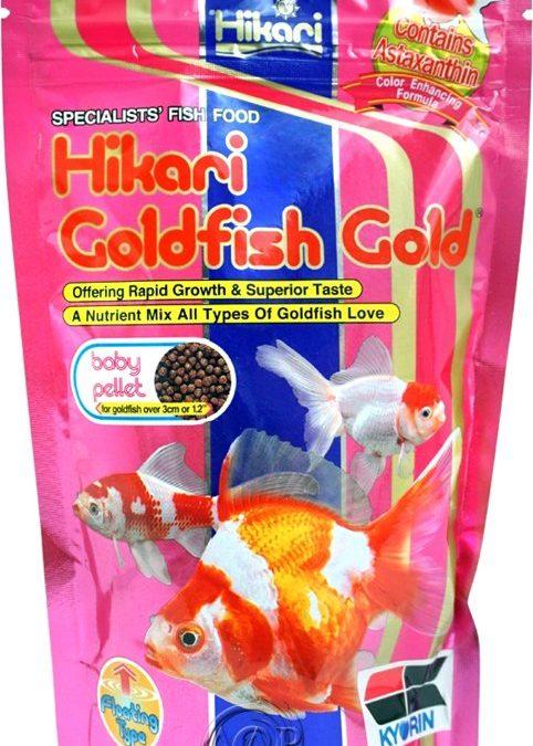 Hikari Goldfish Gold Baby